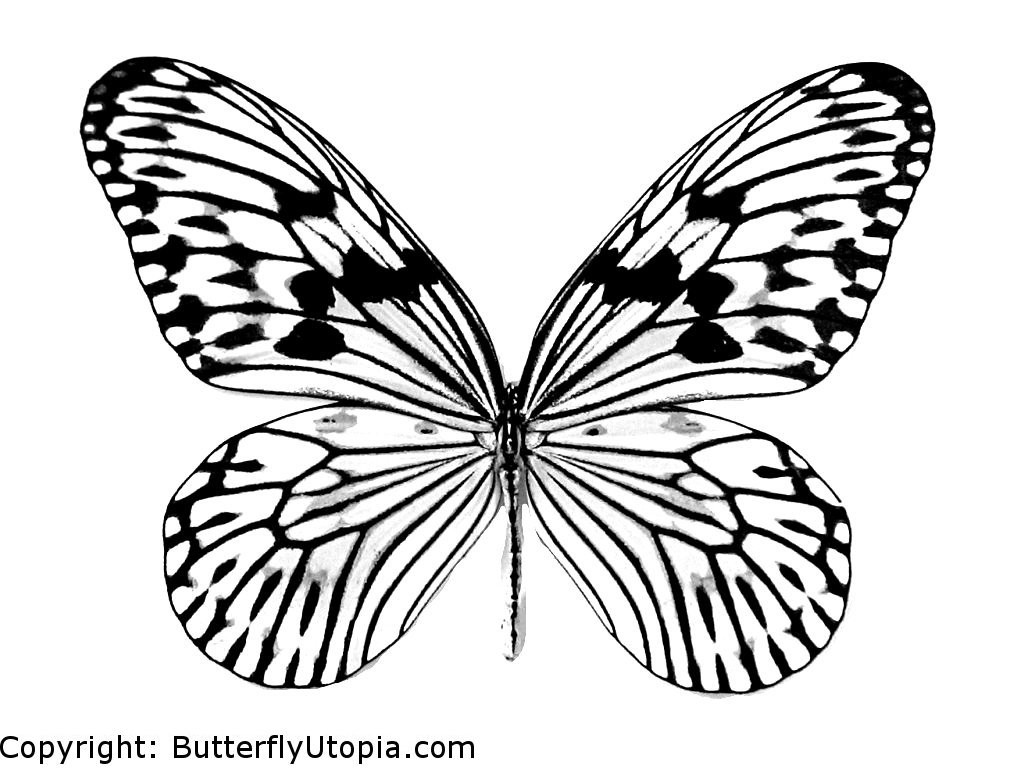 Butterfly Coloring Pages Butterfly Coloring Pages For Kids 11