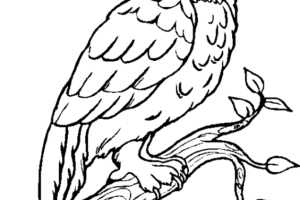 Owl Coloring Pages | Coloring page | #4