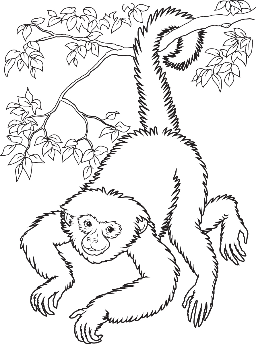 Monkey Coloring Pages Love coloring pages 13 Free